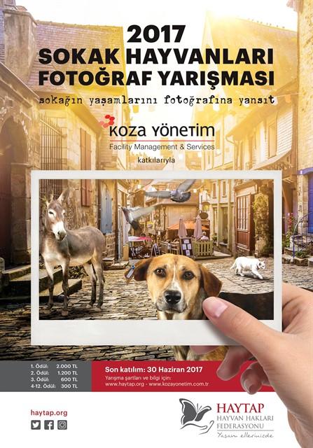 Haytap 2017 Sokak Hayvanları Fotoğraf Yarışması