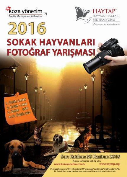 Haytap 2016 Sokak Hayvanları Fotoğraf Yarışması