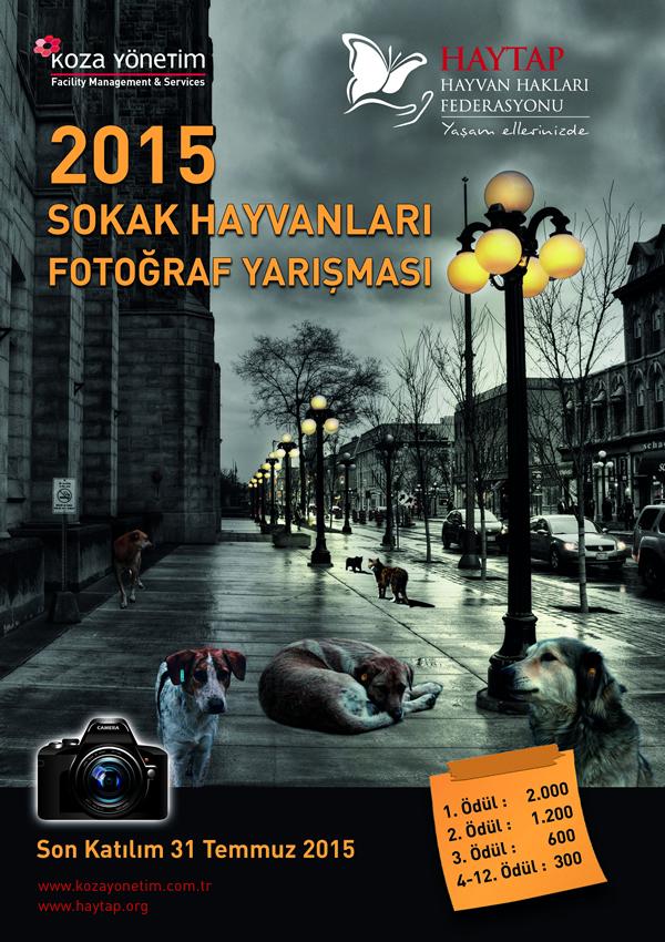 Haytap 2015 Sokak Hayvanları Fotoğraf Yarışması