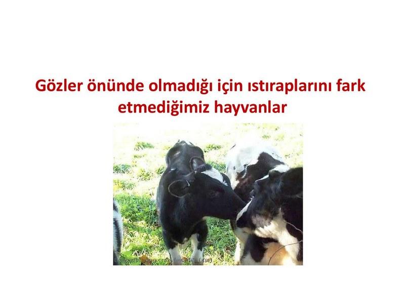 Çiftlik Hayvanlarının Acısı ! - Haytap Onur Kurulu Üyesi Prof.Dr.Tamer Dodurka