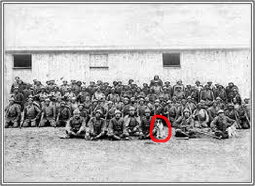 Çanakkale'de 17. Alay Komutanı Yarbay Hasan Bey ve Köpeği Canberk