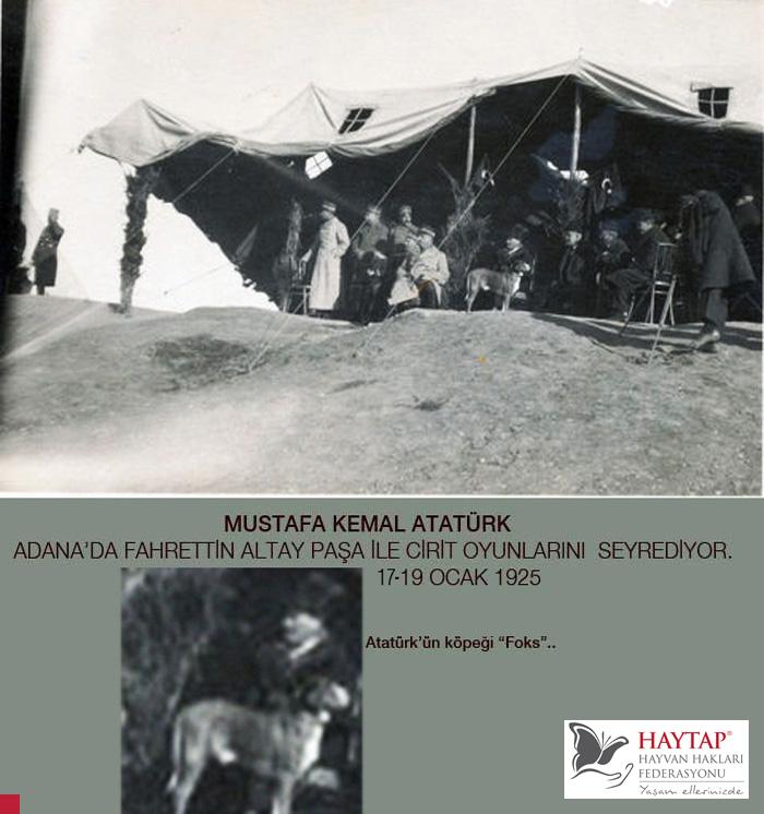 Atatürk'ün Köpeği Foks'un Yayınlanmamış Fotoğrafları İlk Olarak Haytap Sitede !