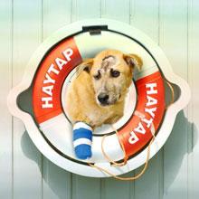 Sahipsiz Hayvanları Beslediğimizde Komşu – Site Yönetimi Müdahalesinde Yapılacaklar: