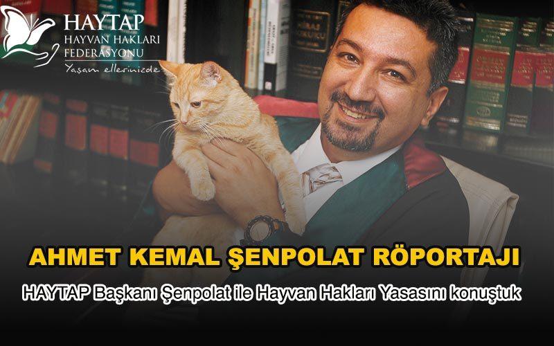 Haytap Başkanı Ahmet Kemal Şenpolat'ın Kedici Dergisi Röportajı