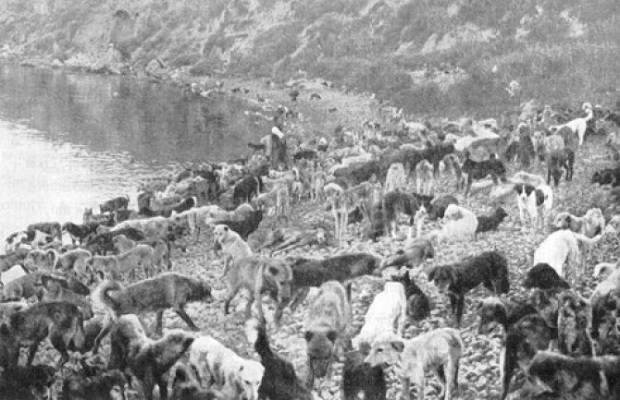 1910 Hayırsızada Toplu Sürgün ve Katliamı