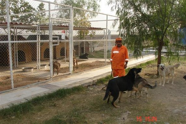 Adana Bakımevi Pitbull Bölmeleri, Her Şehirde Yapılmalı
