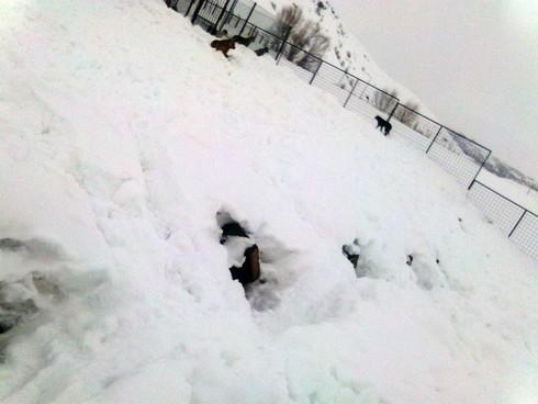 Bitlis Bakımevinde Kardaki Hayvanlar Bolu'dan Daha Mutlu ve Huzurlu