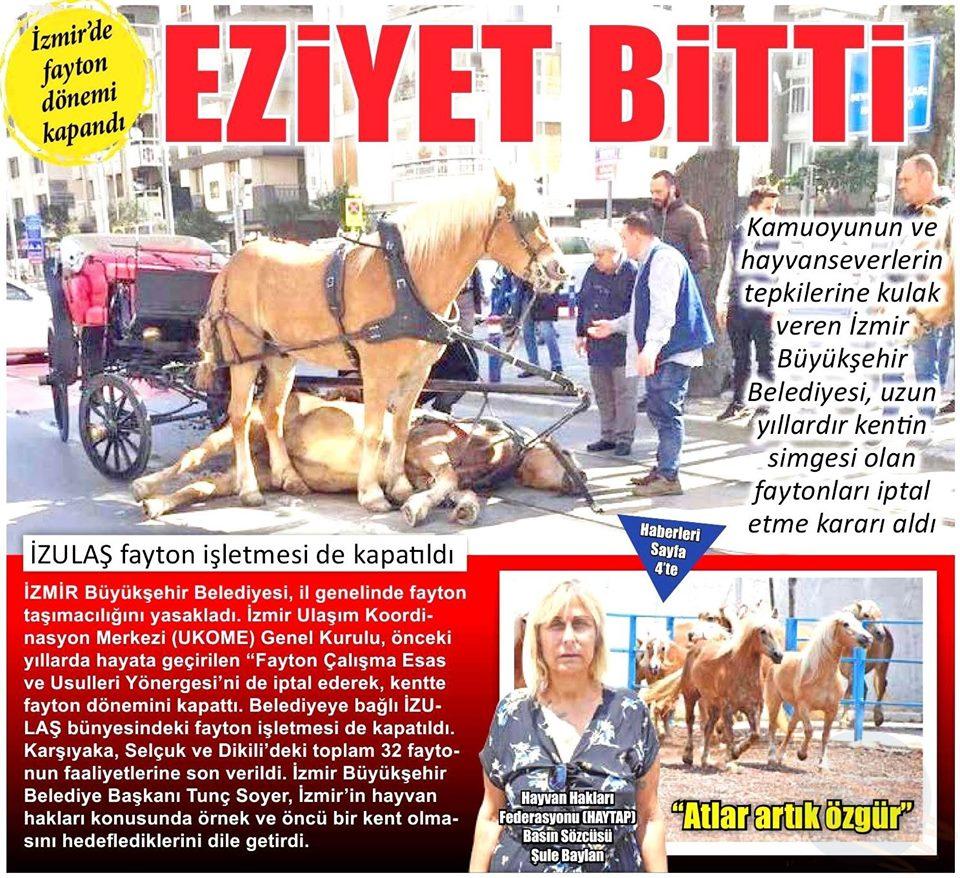 Haytap'tan Fayton Atlarına Dair Başarı Öyküleri