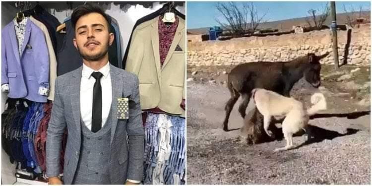 TikTok Hayvanlara Şiddete Karşı HAYTAP İle