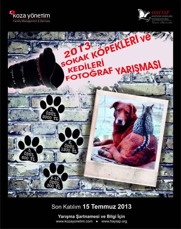 HAYTAP ve Sokak Hayvanları! - Ruhat Mengi