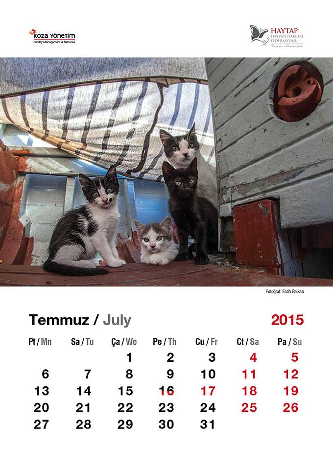 Haytap ''Sokak Hayvanları ve Şehir Konulu'' 2015 Masa Takvimleri