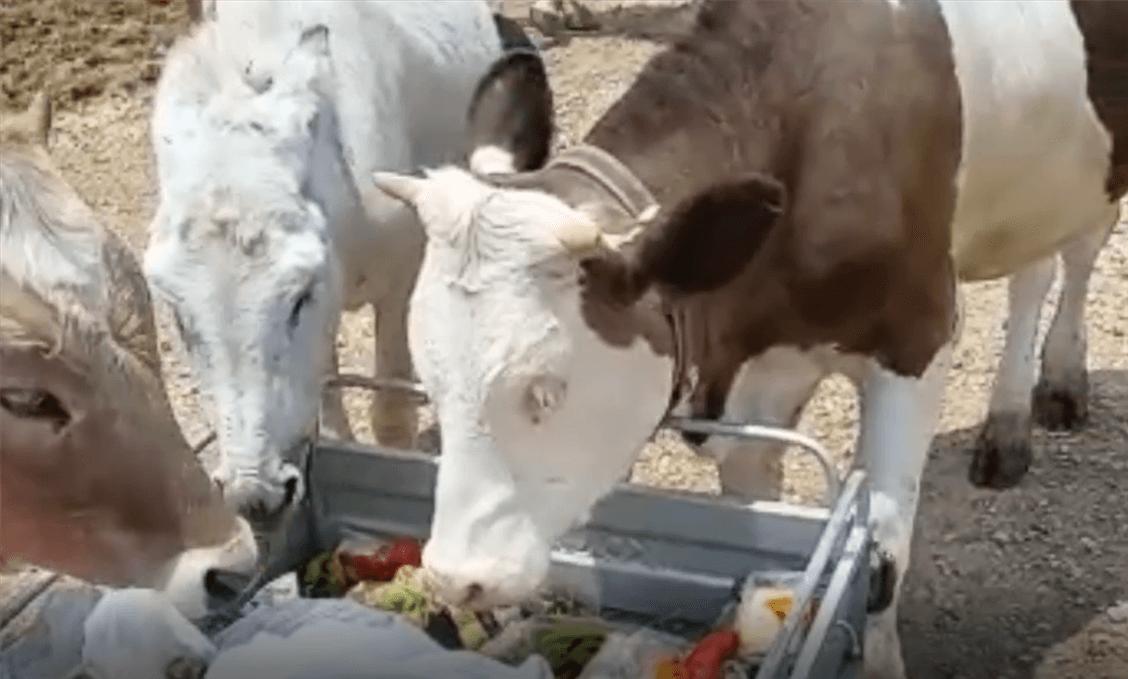 Haytap Emekli Hayvanlar Çiftliğinde Bu Hafta- 22 Haziran 2021