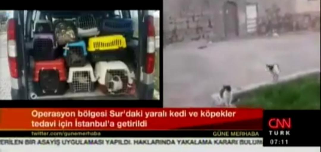 HAYTAP Diyarbakır Sur bölgesindeki hayvanlara yardım eli uzatıyor