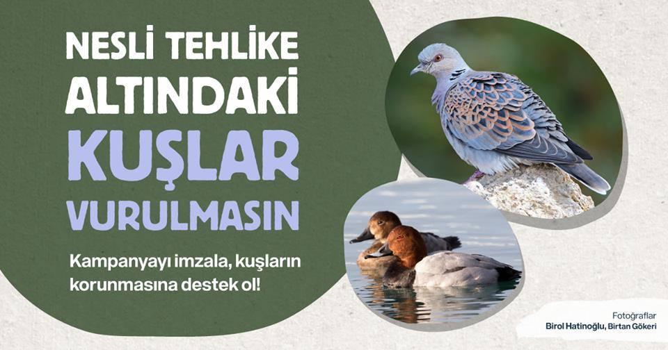 Nesli Tehlike Altındaki Kuşlar da , Diğer Hayvanlar Da Artık Vurulmasın !