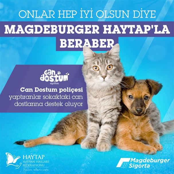 Magdeburger Sigorta, HAYTAP İş Birliğiyle Sahipsiz Hayvanlara Destek Verecek