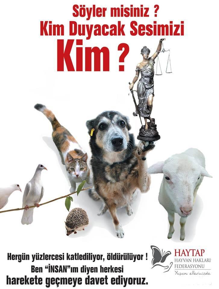 21 Ocak 2020 İtibarıyla Hayvanları Koru-MA Yasasında Neler Oluyor?