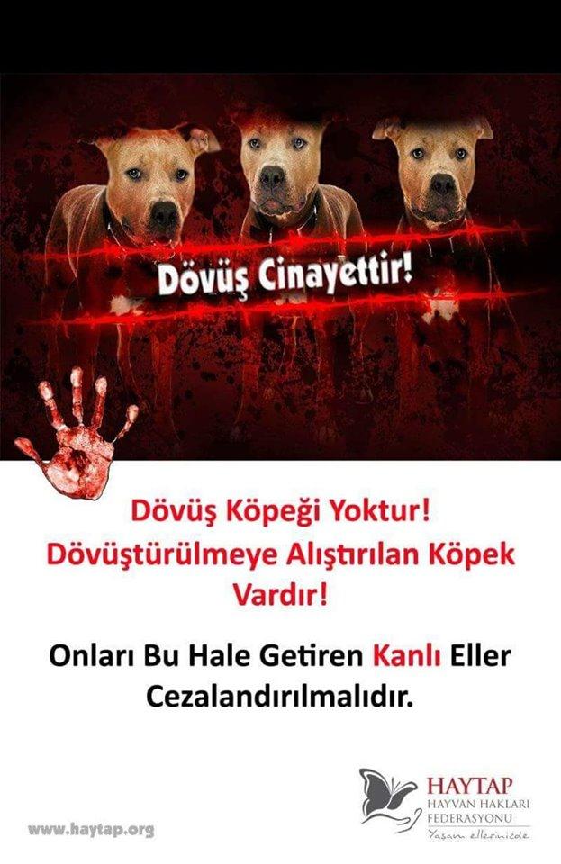 Hayvan Dövüştürenlere Mahkeme Kararıyla Ceza !