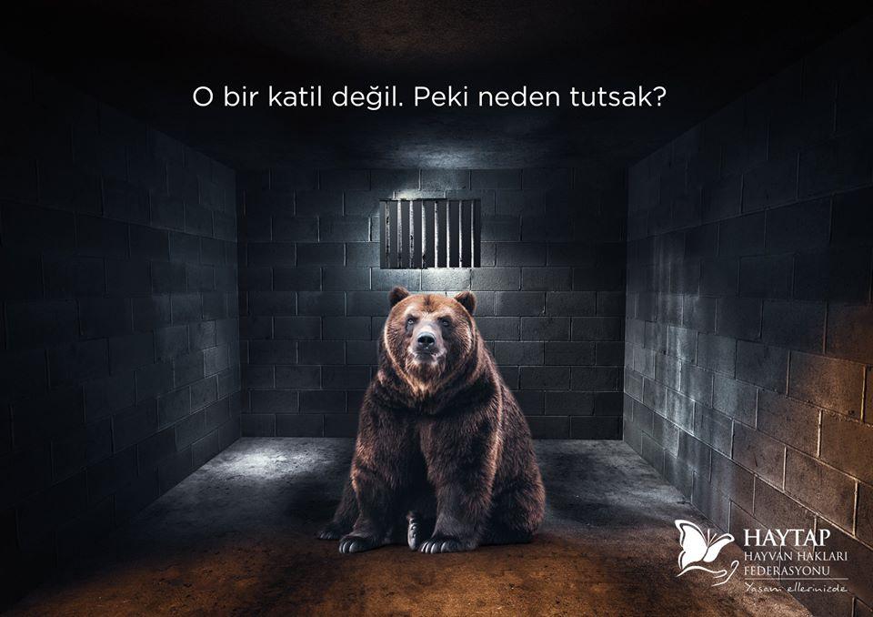 Hayvanat Bahçesi Yalanları