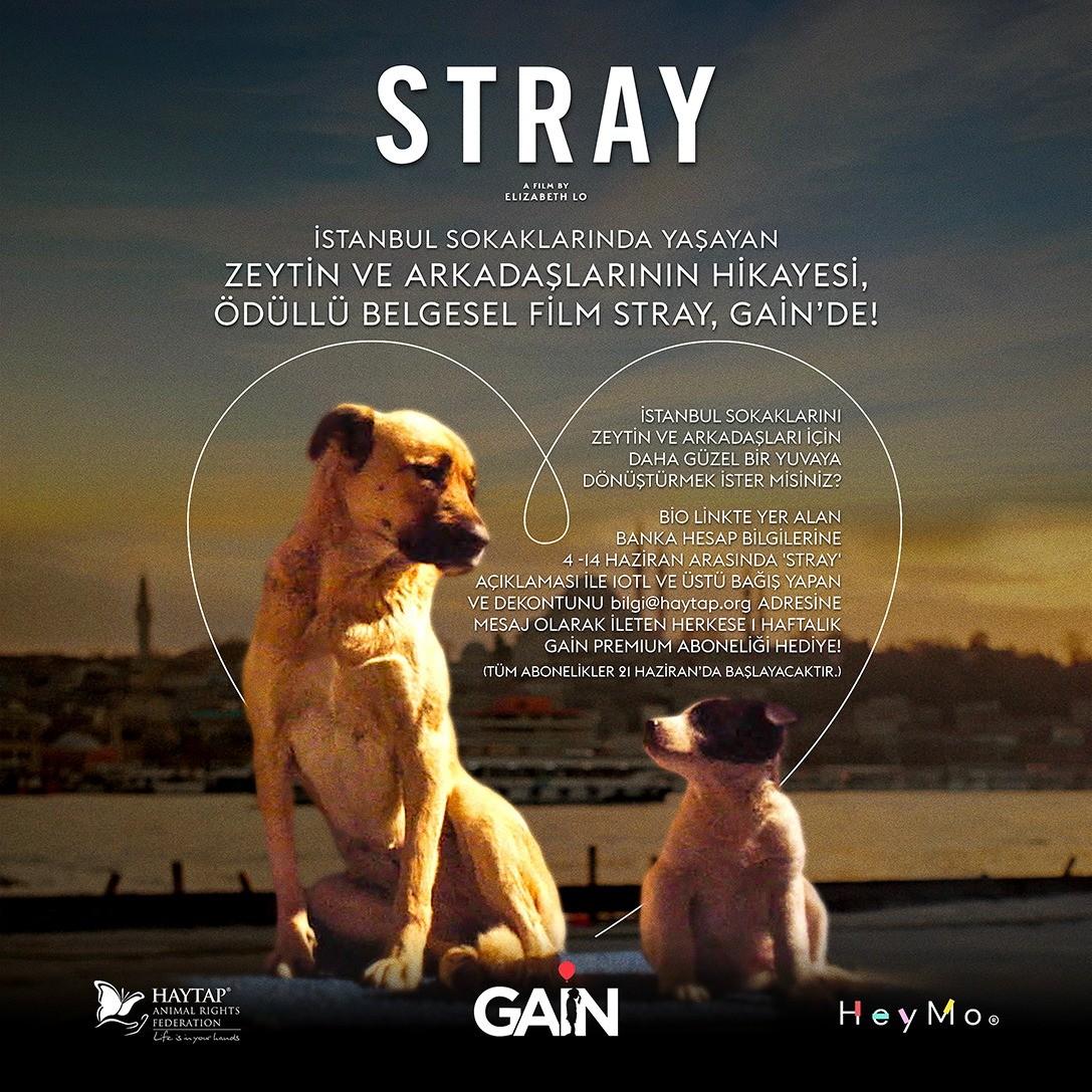 Haytap & Gain ve Stray Filmi Ortaklığı Sahipsiz Hayvanlara Destek Olmaya Çağırıyor