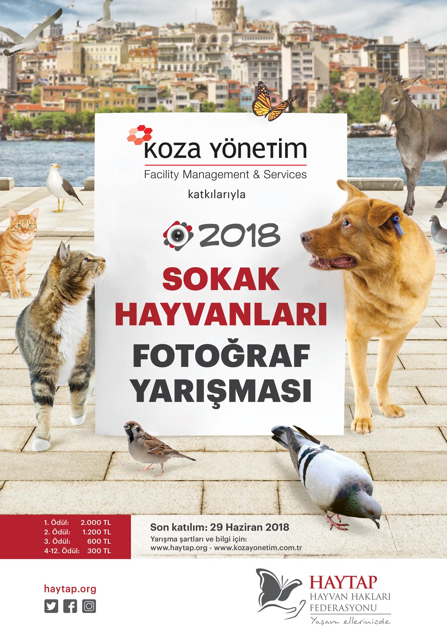 Haytap 2018 Sokak Hayvanları Fotoğraf Yarışması