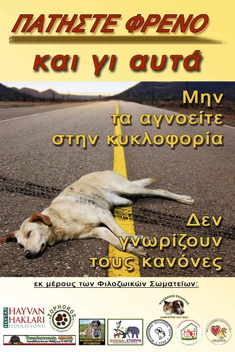Haytap Afişleri Yunanistan'da Hayvanlara Umut Oldu...