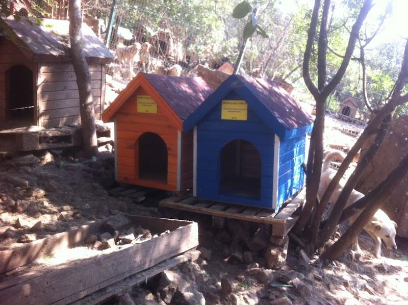 Haytap 2015 Takvimi  İle Adalar Bakımevine 20 Adet Kulübe Yardımı