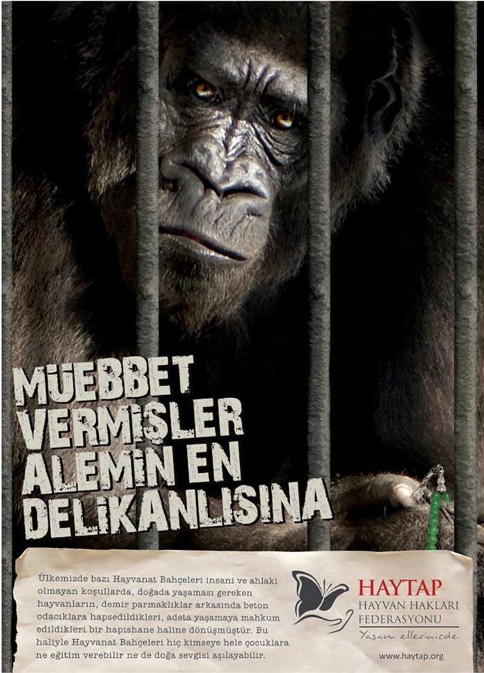 Hayvanları Koruma Kanunu için TBMM de 24-6-2014 Tarihli MüzakereTutanağı