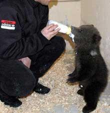Kim ayı?..