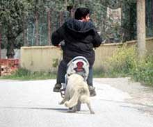 Kendi Hayvanını Motorsikletine Bağlayarak Sürükleyen Kişi İçin İhbar dilekçesi örneği