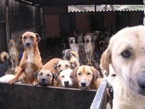Hayvanseverler Tarım Bakanlığının Gönüllü Neferi mi ?