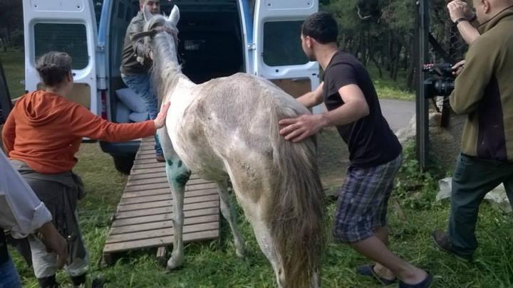 Beyaz Atı Kurtarmak