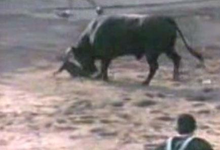 Boğa Güreşleri İsviçre Uluslararası Hayvan Hakları Mahkemesinde !