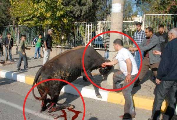 (*) Hayvanlara Eziyet Daha Ne Kadar Kabahatler Kanunu Kapsamında Kalacak ?