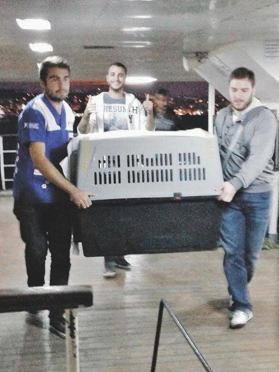 Burgazada'da Bulunan Yaralı Leylek Kurtarıldı