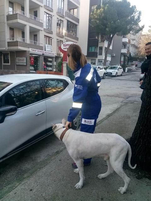 Bursa'da arka ayakları tutmaz halde bulundu...