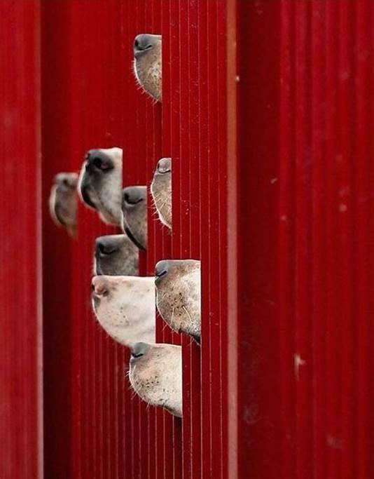Hayvanları Koruma Yasası'nın Değiştirilmesinde Kronolojik Olarak Katedilen Yol !