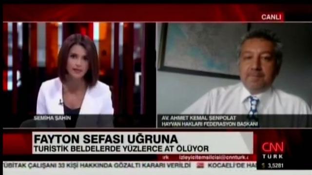 CNNTURK - Haytap Fayton Atlarının Sona Ermesini İstiyor