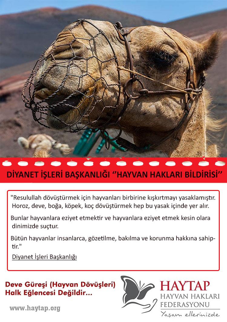 Kültür Bakanlığından Geri Adım! Halk Sporları Adı Altında ''Hayvan Dövüşleri'' Maddesi Çıkartılıyor