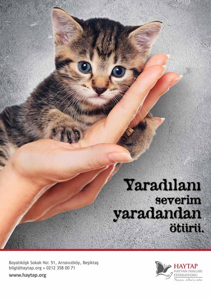 Bir Kedinin Ölümü ...Türkiye'de Bir Bakışı Değiştiriyor (mu ?) !