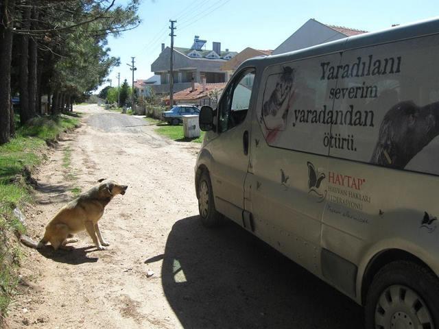 Haytap, Enez Sokak Hayvanları İçin Mama Dağıttı