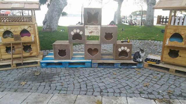 2016 HAYTAP Takvimleri Yardımı Erdek'de Kedi Evi Oldu