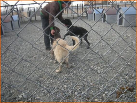 (*) SHKD Erzincan'da Kısırlaştırma Eğitiminde