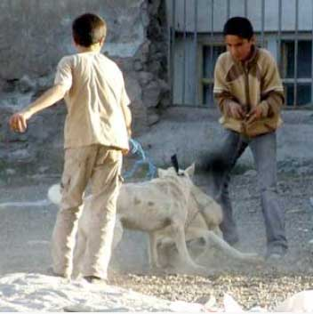 Köpek Dövüşleri Yayınlarının Yasaklanması İstemimiz