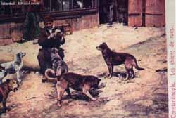 Sokaklarında Köpeklerin Olmadığı Bir İstanbul'u Düşünemiyorum