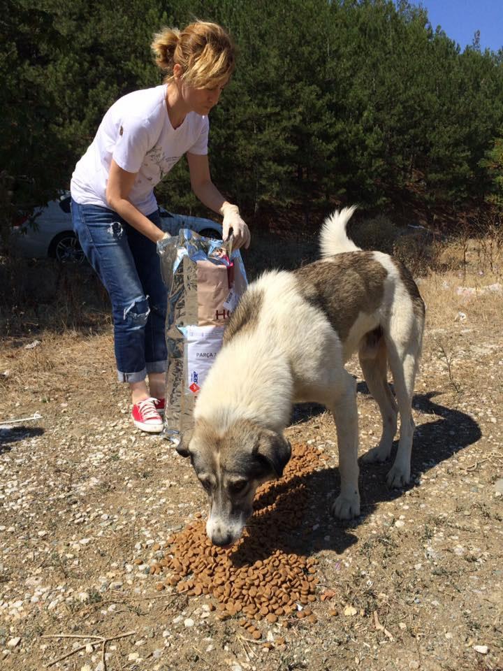 Haytap ve Petlebi İşbirliği ile Bursa'daki Canlara Ulaşan Mama Bağışları