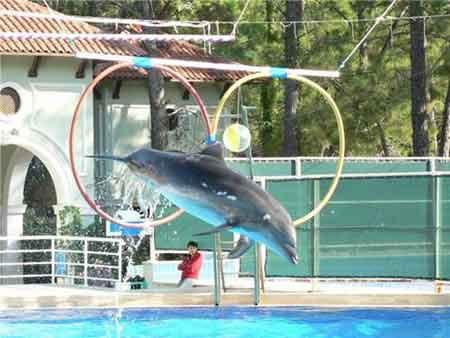 Flipper'ın Kabusu !