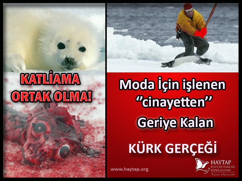 Fok Katliamı Yapan ve Teşvik Edenleri Kınıyoruz!