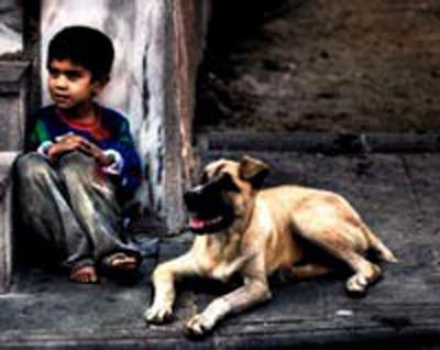 Fotoğraf Çekerek Sokak Hayvanlarına Destek Olun - Neslihan Tunç