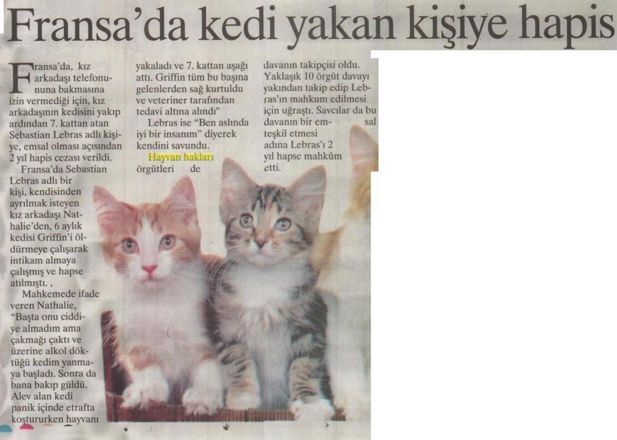 Fransada Kedi Yakan Kişiye Hapis