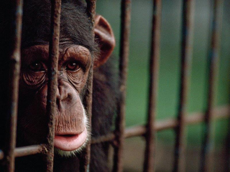 Hayvanat Bahçelerinin Tüm Dünyada Kapatılması İçin 8 Neden